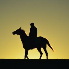The Dawn Horse